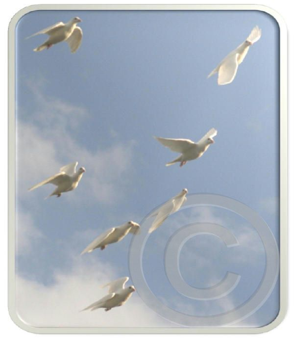 Photo Package I:  Doves in Flight