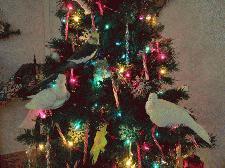 christmasdoves-joevicky2.jpeg
